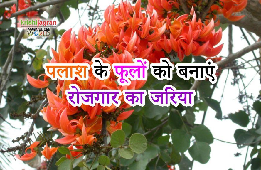 पलाश के फूलों को बनाएं रोजगार का जरिया Palash Flower In Hindi