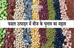 फसल उत्पादन में बीज के चुनाव का महत्व