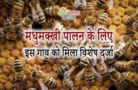 इस खास गांव को मिला मधुमक्खी पालन का विशेष दर्जा, पढ़ें पूरी खबर