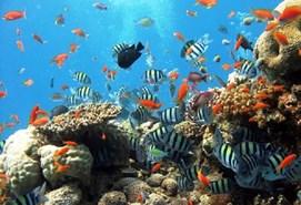 रंगीन मछलियों के सहारे मिलेगा युवाओं को रोजगार