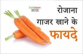 सर्दियों में गाजर खाने के कई फायदे, सभी बीमारियां रहेंगी दूर