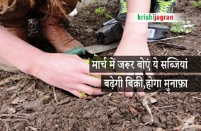 मार्च में बुवाई: किसान जरूर लगाएं ये फसल, बढ़ेगी बिक्री