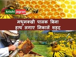 बिना छेड़छाड़ किए मधुमक्खियों से निकालें शहद, कमाएं अच्छा मुनाफ़ा