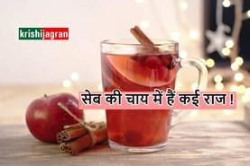 सेब से बनी चाय पहुंचाती है कई फायदे, जानिए इसके लाभ और बनाने का तरीका