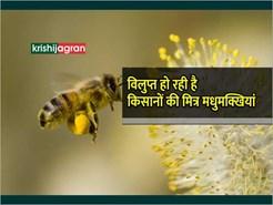 किसानों की मित्र मधुमक्खी विलुप्त हो रही है, फसल उत्पादन पर पड़ेगा भारी प्रभाव