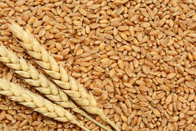 Wheat production will not be less than last session: S K Pattaaniyak