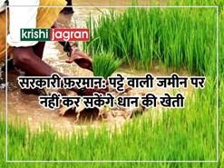 इस राज्य के किसान पट्टे वाली जमीन पर नहीं कर सकेंगे धान की खेती, जानें वजह