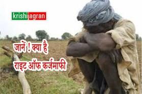 किसान कांग्रेस लगाई पीएम से किसानों का कर्ज माफ करने की गुहार, जानें क्या है राइट ऑफ कर्जमाफी ?