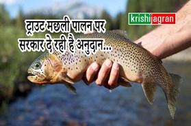 ट्राउट मछली से किसानों को हो रही है आमदनी, सरकार दे रही है अनुदान