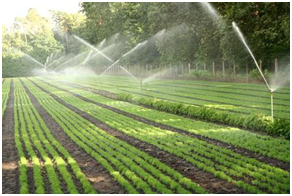 More production in less effort with neer-irrigation ...