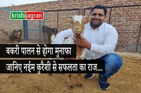 देश-विदेश में 'बरबरी गॉट फार्म' की धूम, जानिए नईम कुरैशी से बकरी पालन की विधि