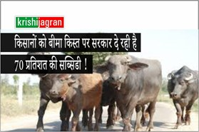 पशुओं का बीमा करवाने पर किसानों को बीमा किस्त पर सरकार दे रही है 70 प्रतिशत की सब्सिडी