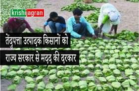 तेंदुपत्ता उत्पादक किसानों को राज्य सरकार से मदद की दरकार