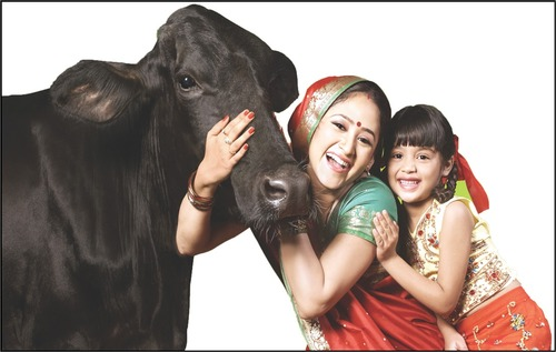 For more milk production, give animals to Kapila Animal Feed ...