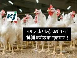बंगाल के पोल्ट्री उद्योग को 1400 करोड़ का नुकसान !