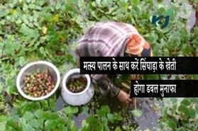मत्स्य पालन के साथ करें सिंघाड़ा के खेती, होगा दोहरा लाभ