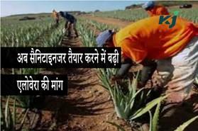 आय बढ़ाने के लिए किसान शुरू करें एलोवेरा की व्यवसायिक खेती