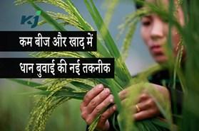 SRI Paddy Cultivation: इस खास तकनीक से कम बीज और खाद में करें धान की बुवाई, ये है खेती का तरीका