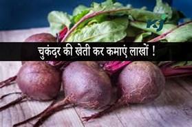 चुकंदर की खेती कर कमाएं भारी मुनाफा, जानिए खेती करने का तरीका