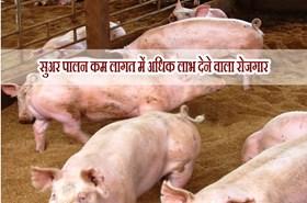 अधिक लाभ देने वाला है सुअर पालन का धंधाः जेरोम शोरेन