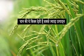 """""""इस धान की किस्म से जितना उत्पादन आता है, उतना किसी से नहीं आ सकता""""- सफल किसान अमृतलाल"""