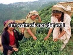 बारिश के के कारण चाय बागानों में उत्पादन प्रभावित