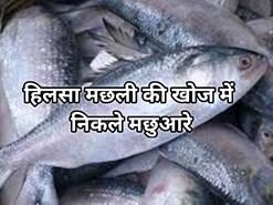 हिलसा मछली की खोज में फिर सुमद्र में कूद पड़े बंगाल के मछुआरे