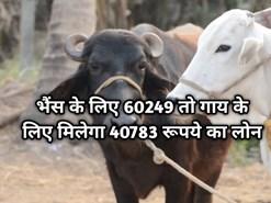 Pashu kisan credit yojana के तहत मिल रहा डेयरी लोन, भैंस के लिए 60249 तो गाय के लिए मिलेगा 40783 रूपये