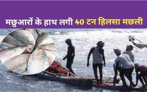 दोबारा बंगाल के मछुआरों के हाथ लगी 40 टन हिलसा मछली