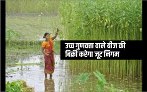 खुशखबरी ! भारतीय जूट निगम खुले बाजार में 1000 टन भेजगा उच्च गुणवत्ता वाले बीज