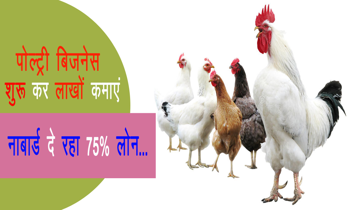 Start Poultry Business, NABARD Offering 75% Loan ...