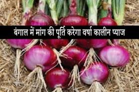 बंगाल में प्याज के मांग की पूर्ति करेगा वर्षा कालीन प्याज, वितरण हुए  उच्च गुणवत्ता वाले बीज