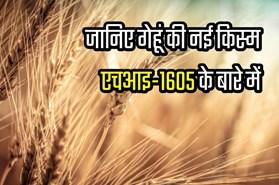 विकसित हुई गेहूं की नई किस्म एचआइ-1605, जानिए किस राज्य के किसानों को मिलेगा ज्यादा उत्पादन