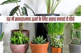 इन छोटे पौधों को घर के कोने में रखने से सकारात्मक ऊर्जा के साथ आएगा धन-वैभव