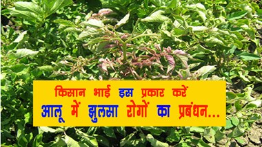 Farmer's brother to manage the scorching diseases in potato ...