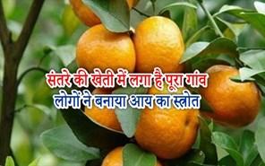 इस गांव के लगभग सभी लोग करते हैं संतरे की खेती, कमाई 50-80 हजार रुपए महीना