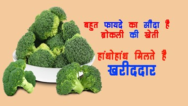 It is a great deal to cultivate broccoli ...