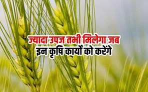 अच्छी उपज पाने के लिए किसान इन कृषि एवं बागवानी कार्यों को जरूर करें