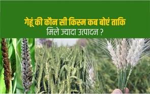 Wheat farming: गेहूं की अगेती और पछेती बुवाई से जुड़ी हर जरूरी जानकारी