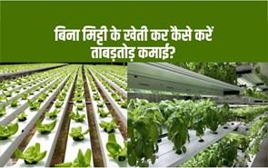 Hydroponic farming: कैसे होती है हाइड्रोपोनिक खेती? जानें विधि