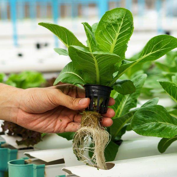 hydroponics kya hai