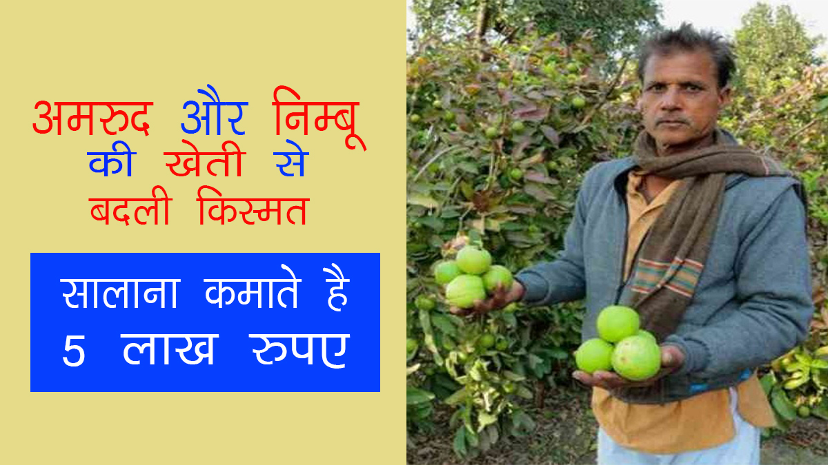 Guaranteed fortune with the cultivation of guava and lemon, earns 5 lakh rupees annually ...