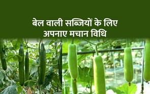 मचान विधि से करें खीरा, लौकी और करेला की खेती, 90 फीसदी फसल नहीं होगी खराब