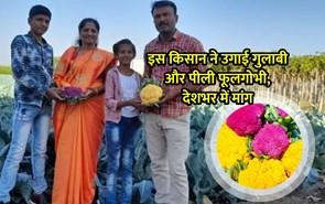 गुलाबी और पीले रंग की फूलगोभी उगाकर इस किसान ने किया कमाल, मिल रही है अच्छी कीमत
