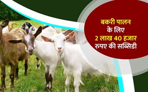 बकरी पालन  के  लिए राज्य सरकार दे रही है 2 लाख 40 हजार रुपए का अनुदान