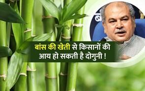 किसानों की आय दोगुनी करने के लिए प्रमुख फसल हो सकती है बांस : केंद्रीय कृषि मंत्री