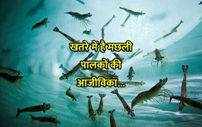 खतरे में है मत्स्य पालन उद्योग, तेजी से विलुप्त हो रही है ताजे पानी की मछलियां