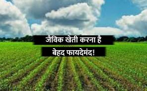 Paramparagat Krishi Vikas Yojana: जैविक खेती करने के लिए प्रति एकड़ के हिसाब से मिलती है सब्सिडी, जानिए कैसे?