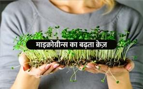 Microgreens Farming: आजकल माइक्रोग्रीन्स बढ़ रहा क्रेज़, घर में उगाना है बहुत आसान