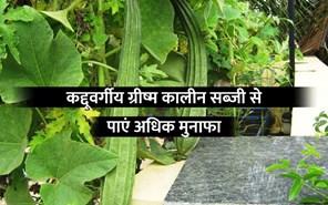 तोरई की वैज्ञानिक खेती से कमाएं अधिक लाभ